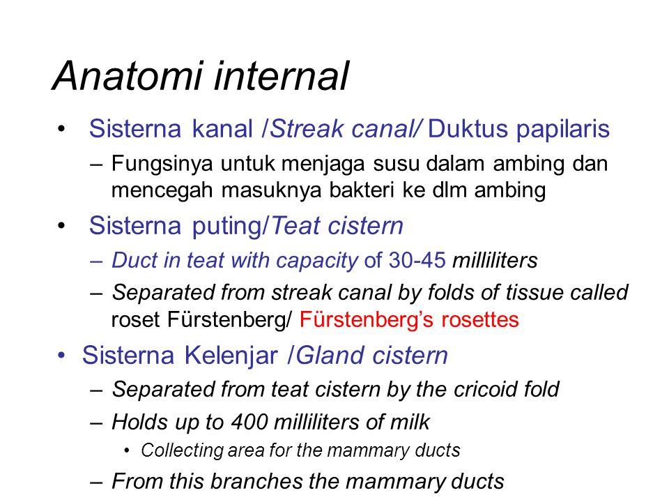 Anatomi internal Sisterna kanal /Streak canal/ Duktus papilaris