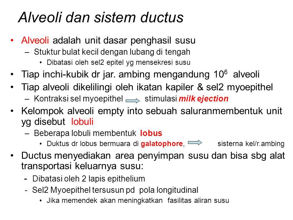 Alveoli dan sistem ductus