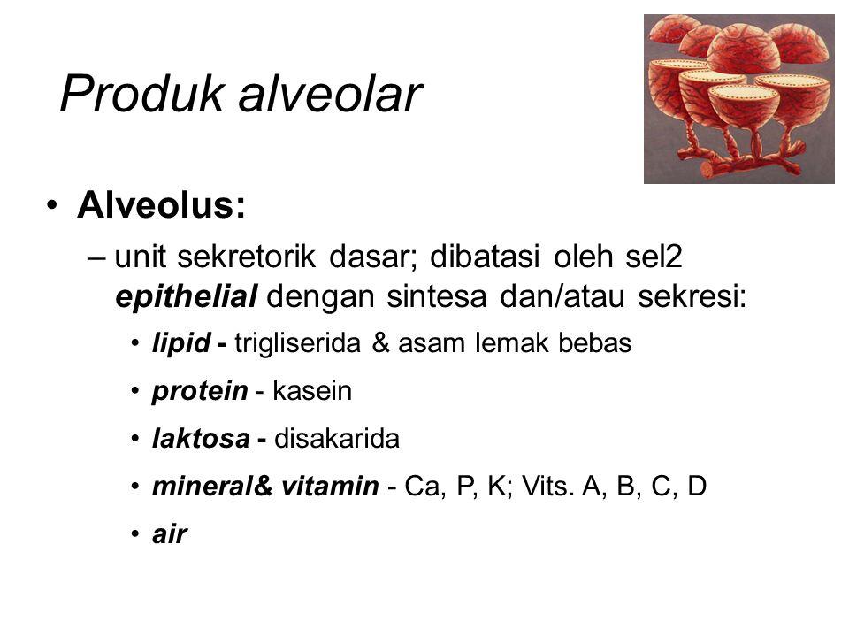 Produk alveolar Alveolus: