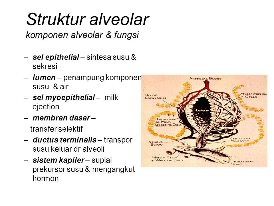 Struktur alveolar komponen alveolar & fungsi