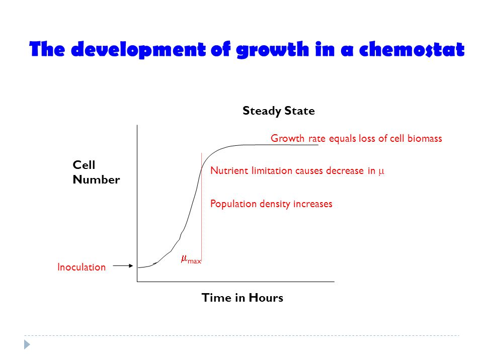 The development of growth in a chemostat