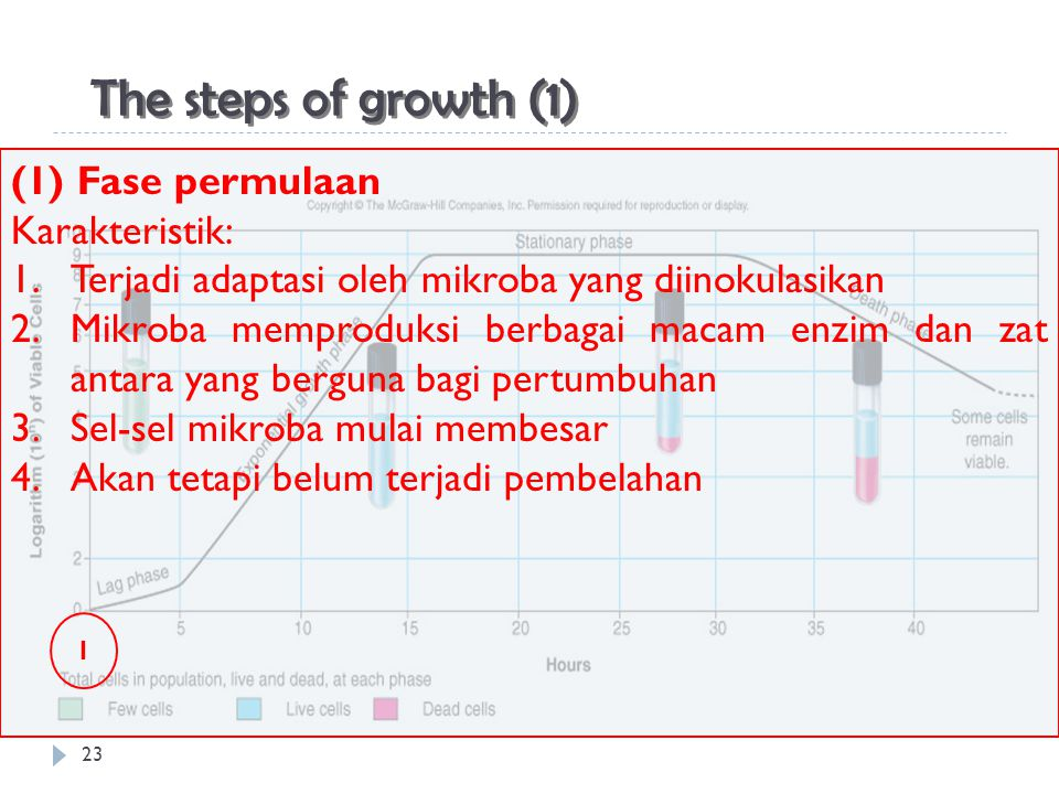 The steps of growth (1) (1) Fase permulaan Karakteristik: