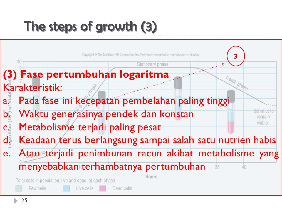 The steps of growth (3) (3) Fase pertumbuhan logaritma Karakteristik: