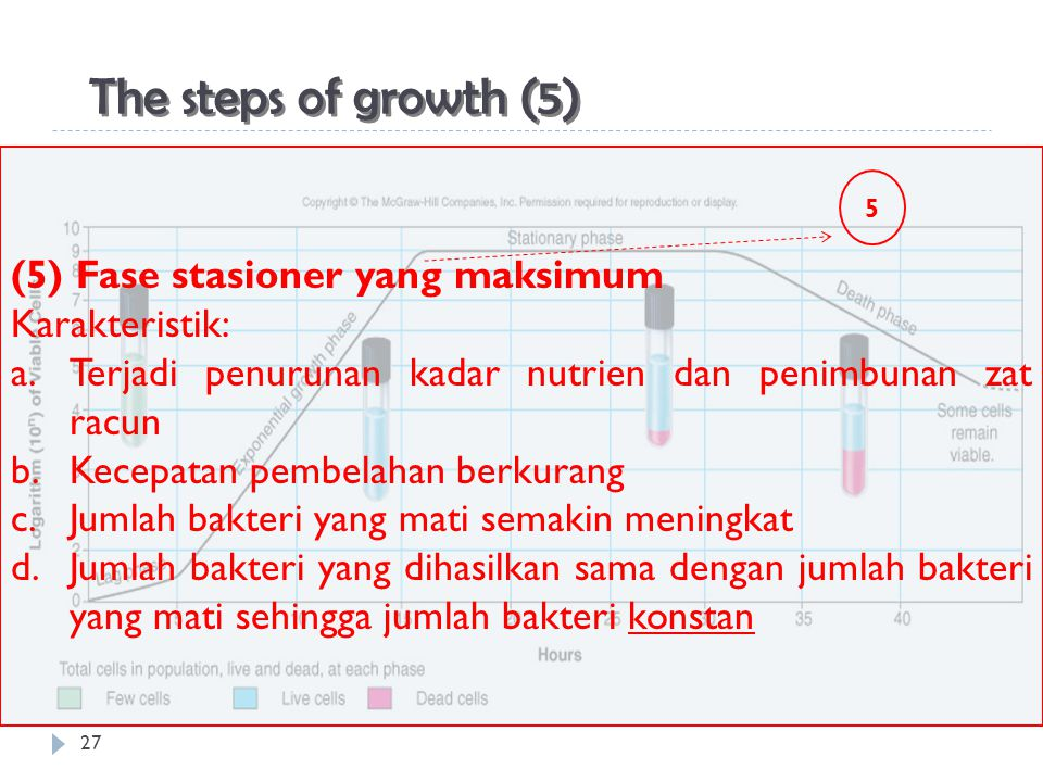 The steps of growth (5) (5) Fase stasioner yang maksimum