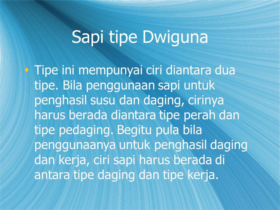 Sapi tipe Dwiguna
