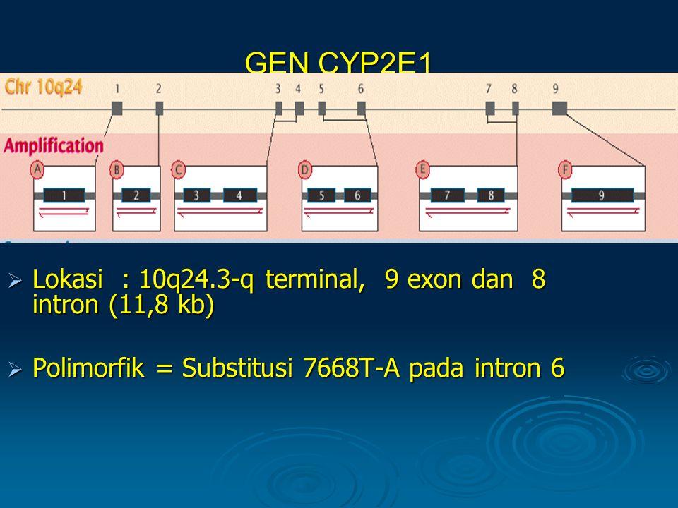 GEN CYP2E1 Lokasi : 10q24.3-q terminal, 9 exon dan 8 intron (11,8 kb)