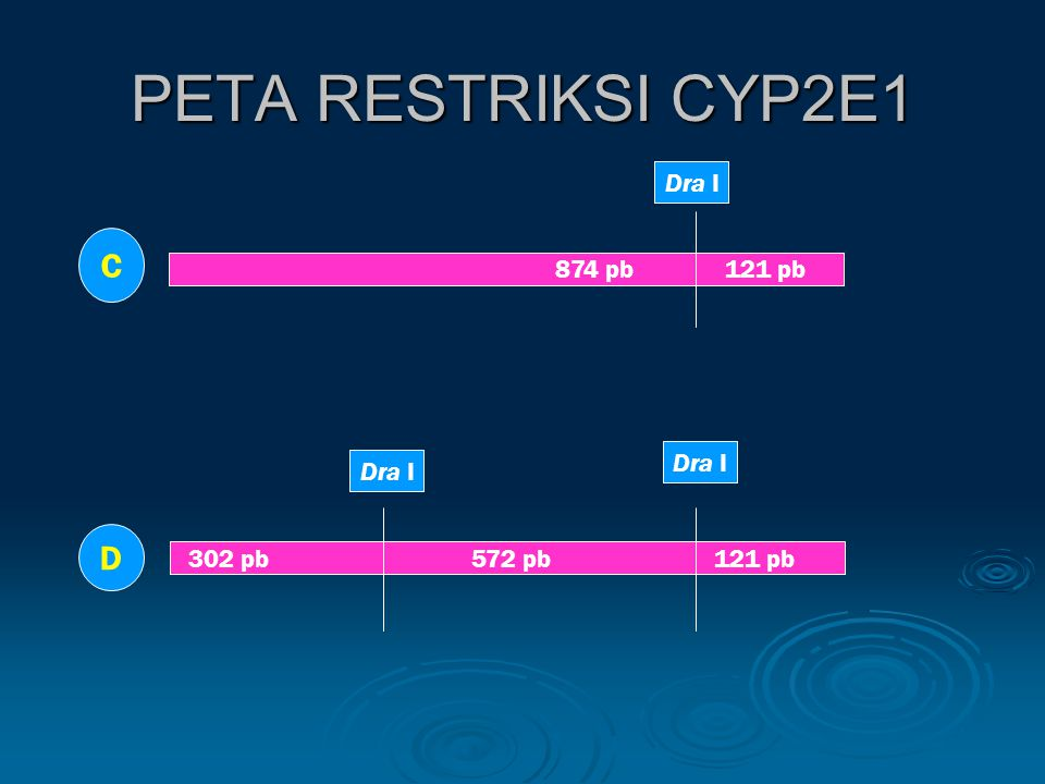 PETA RESTRIKSI CYP2E1 C D Dra I 874 pb 121 pb Dra I Dra I
