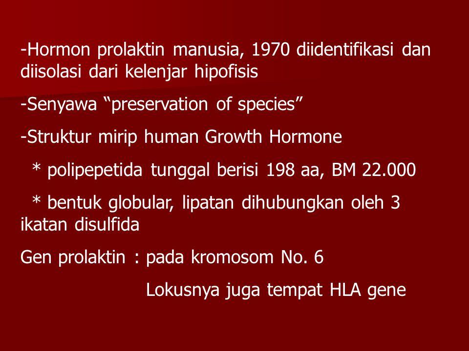 Hormon prolaktin manusia, 1970 diidentifikasi dan diisolasi dari kelenjar hipofisis
