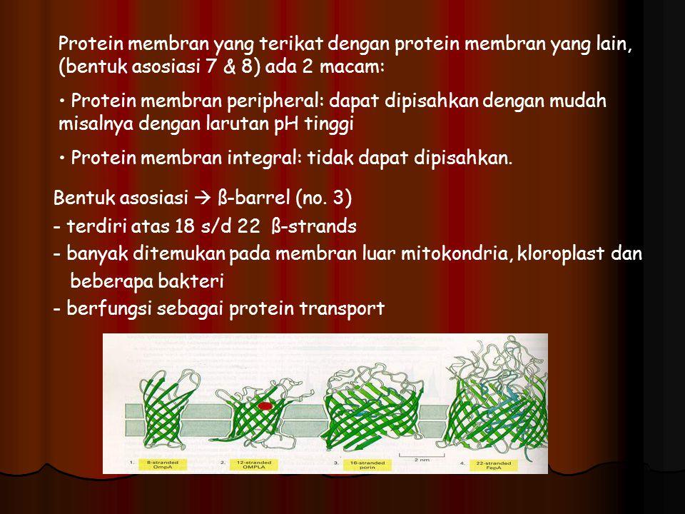 Protein membran yang terikat dengan protein membran yang lain, (bentuk asosiasi 7 & 8) ada 2 macam: