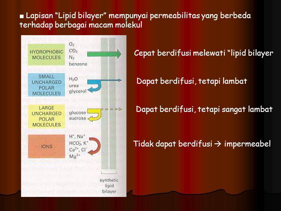 ■ Lapisan Lipid bilayer mempunyai permeabilitas yang berbeda terhadap berbagai macam molekul