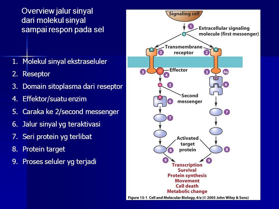 Overview jalur sinyal dari molekul sinyal sampai respon pada sel