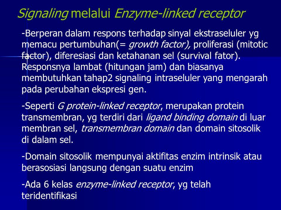 Signaling melalui Enzyme-linked receptor