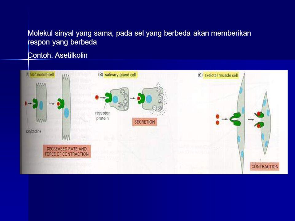 Molekul sinyal yang sama, pada sel yang berbeda akan memberikan respon yang berbeda