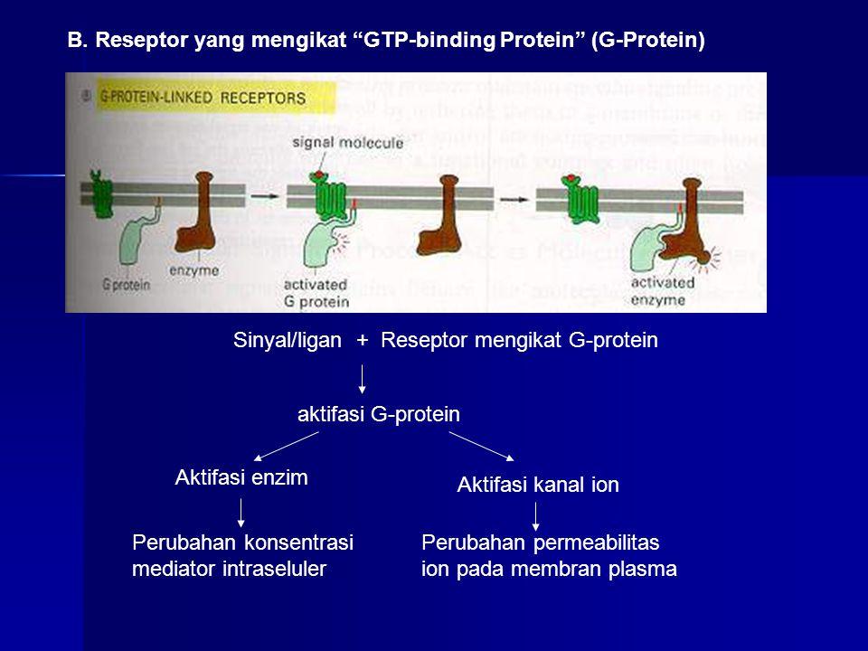 B. Reseptor yang mengikat GTP-binding Protein (G-Protein)