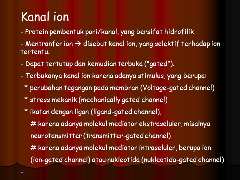 Kanal ion Protein pembentuk pori/kanal, yang bersifat hidrofilik