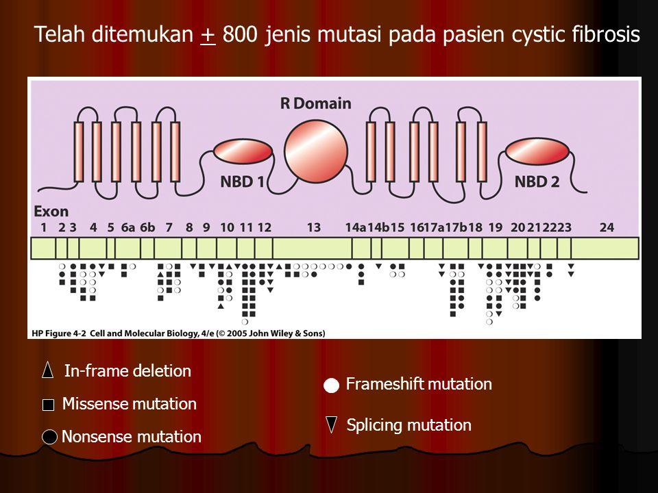 Telah ditemukan + 800 jenis mutasi pada pasien cystic fibrosis