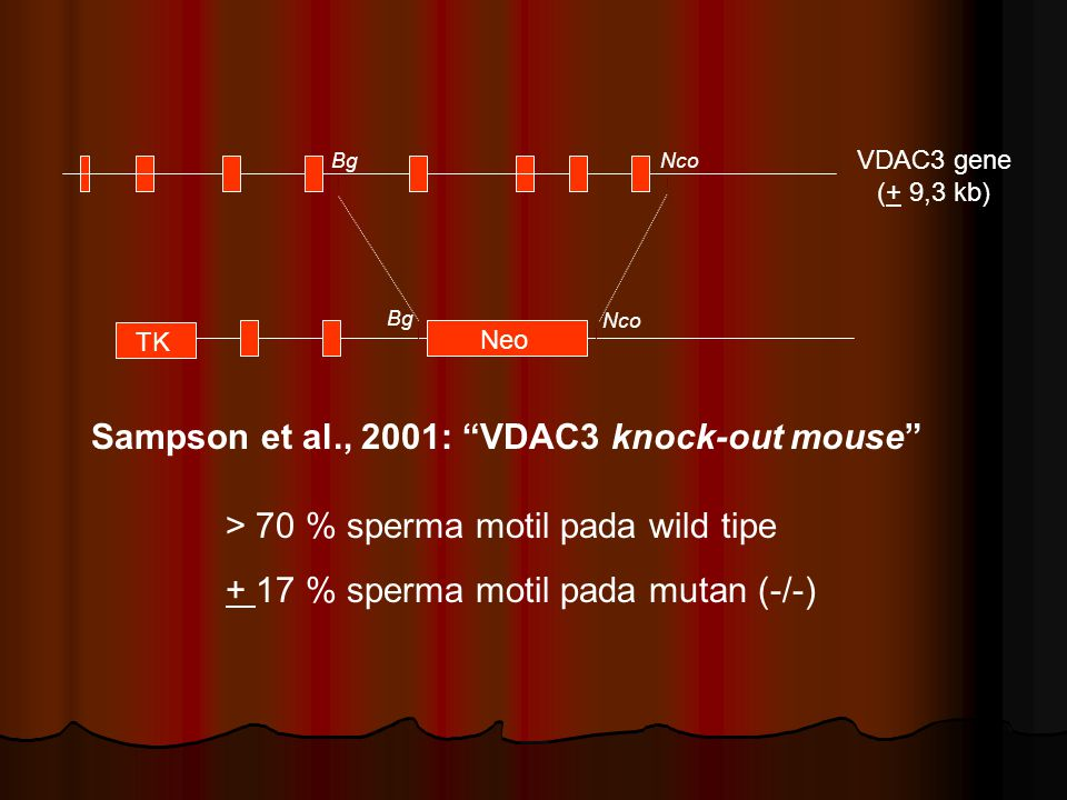 Sampson et al., 2001: VDAC3 knock-out mouse