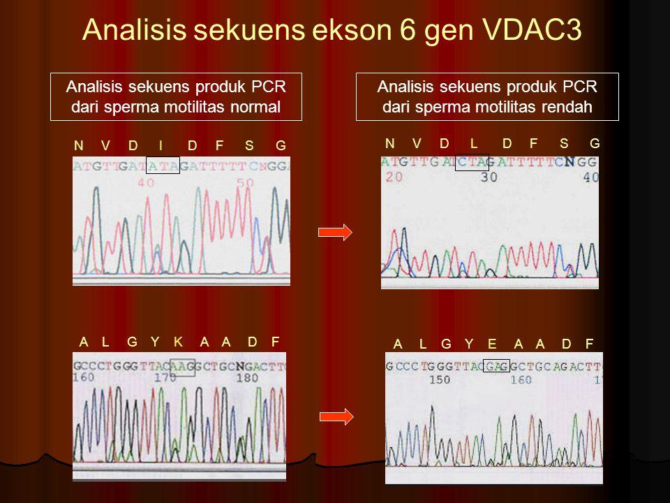 Analisis sekuens ekson 6 gen VDAC3