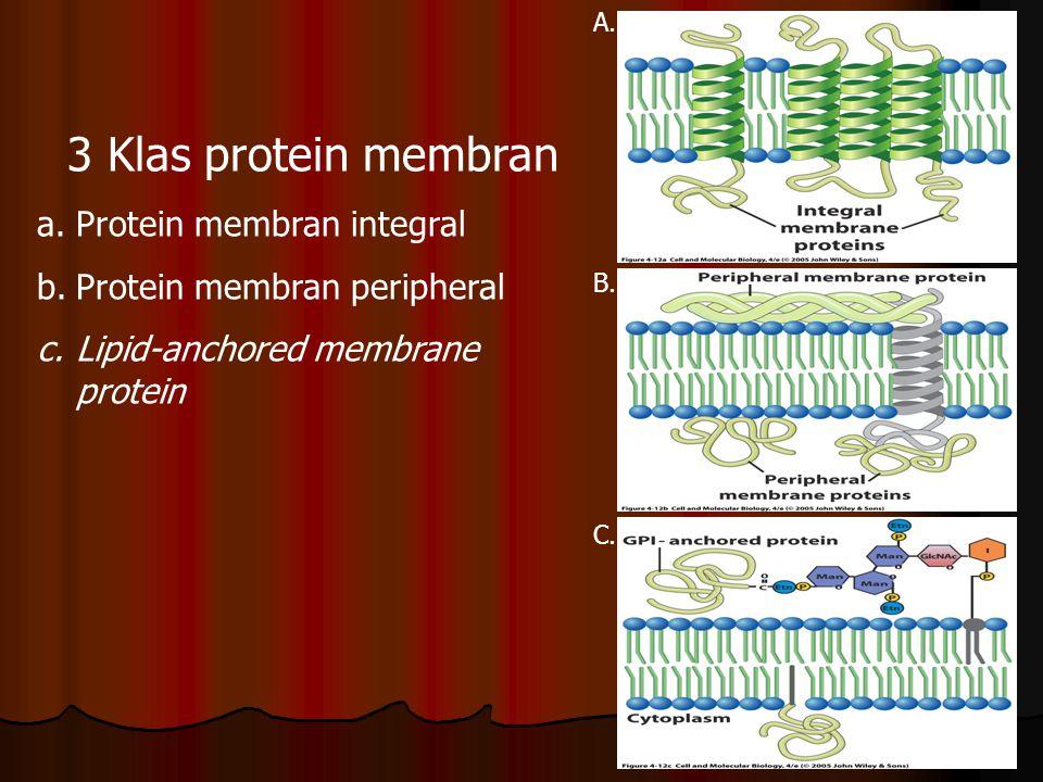 3 Klas protein membran Protein membran integral