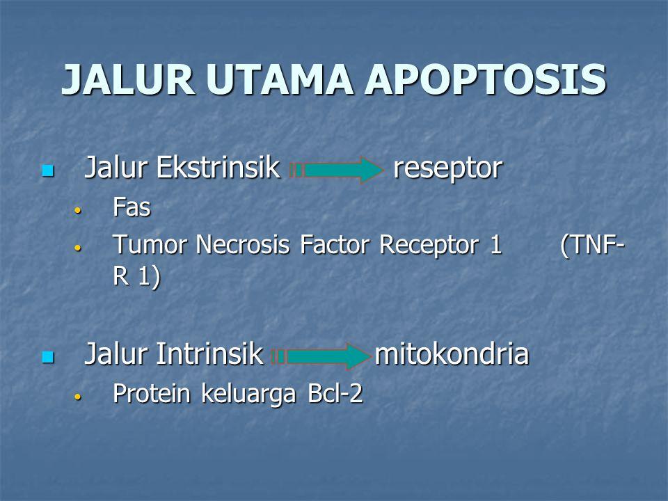 JALUR UTAMA APOPTOSIS Jalur Ekstrinsik reseptor