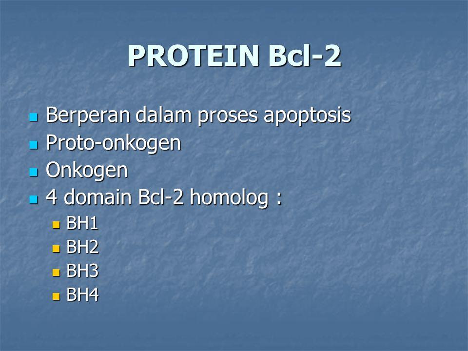 PROTEIN Bcl-2 Berperan dalam proses apoptosis Proto-onkogen Onkogen