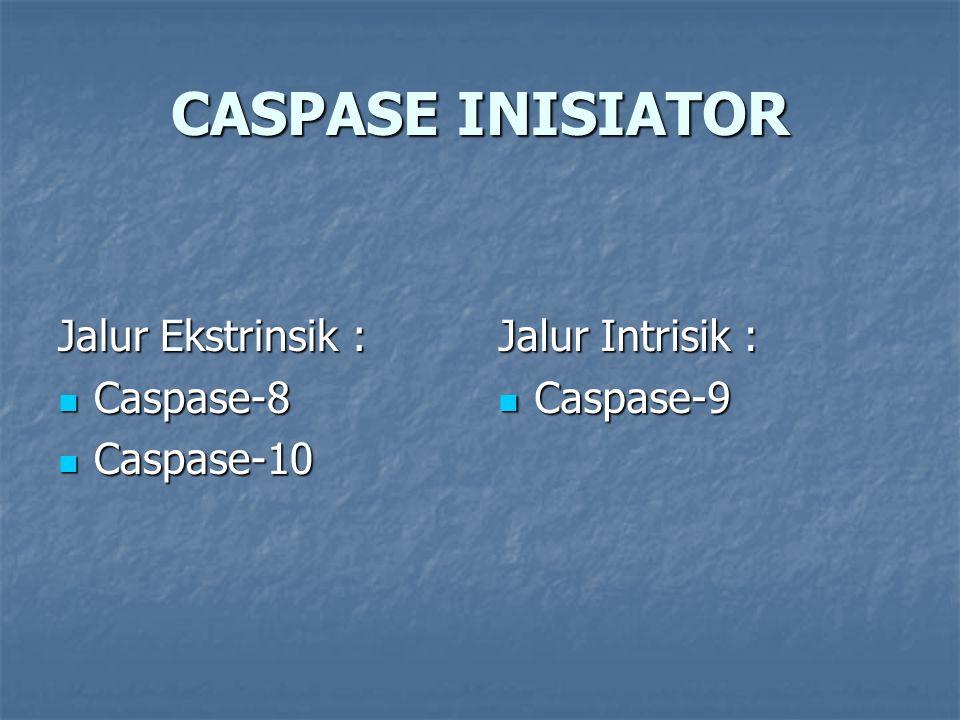 CASPASE INISIATOR Jalur Ekstrinsik : Caspase-8 Caspase-10