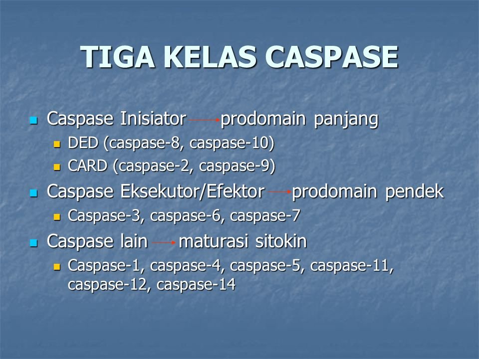 TIGA KELAS CASPASE Caspase Inisiator prodomain panjang