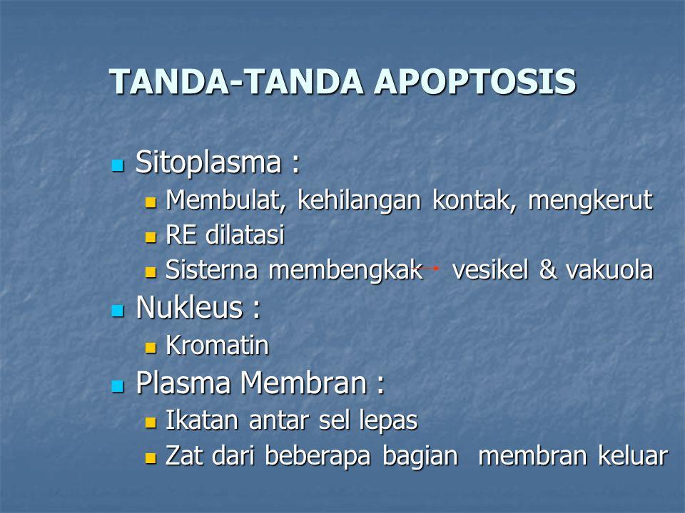 TANDA-TANDA APOPTOSIS