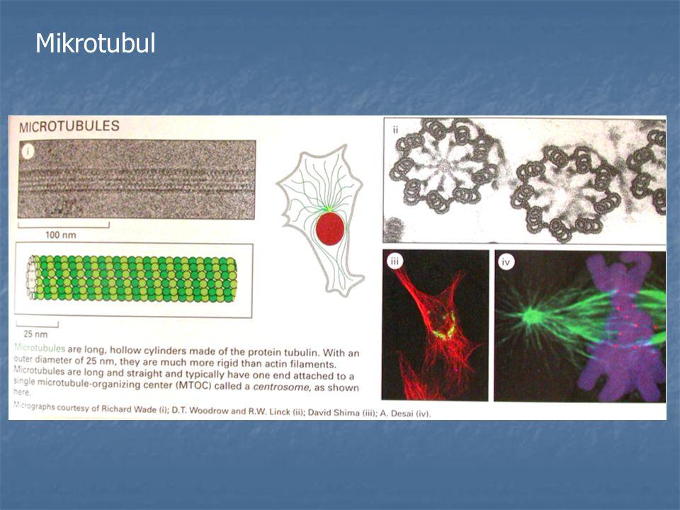 Mikrotubul