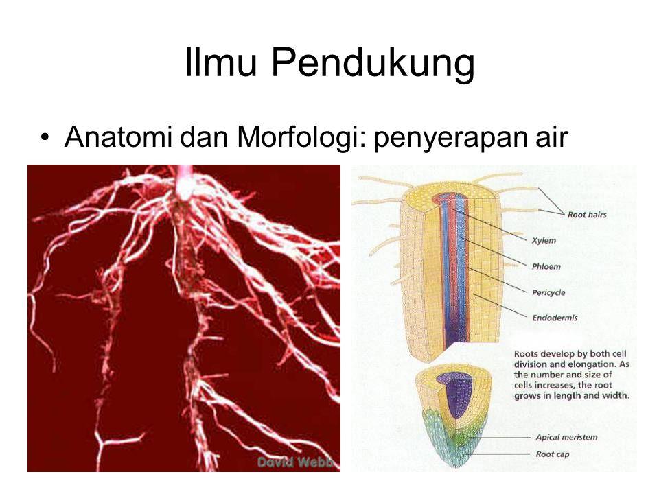 Ilmu Pendukung Anatomi dan Morfologi: penyerapan air
