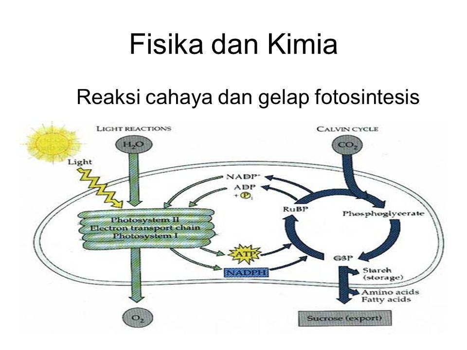 Reaksi cahaya dan gelap fotosintesis
