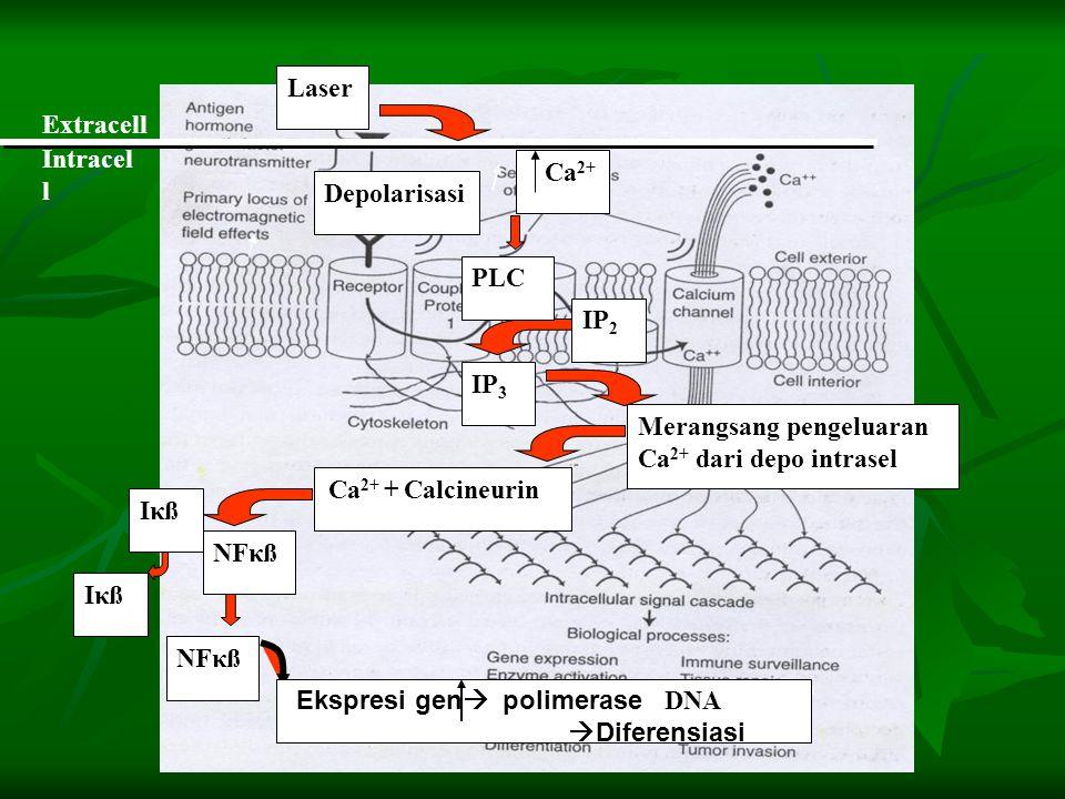 Merangsang pengeluaran Ca2+ dari depo intrasel