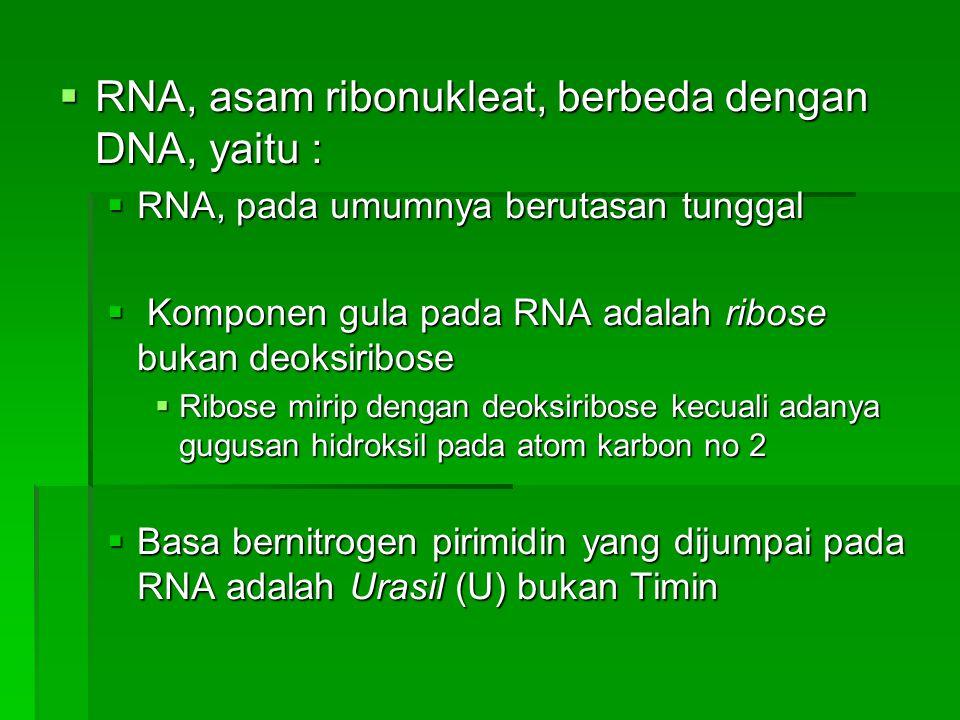 RNA, asam ribonukleat, berbeda dengan DNA, yaitu :