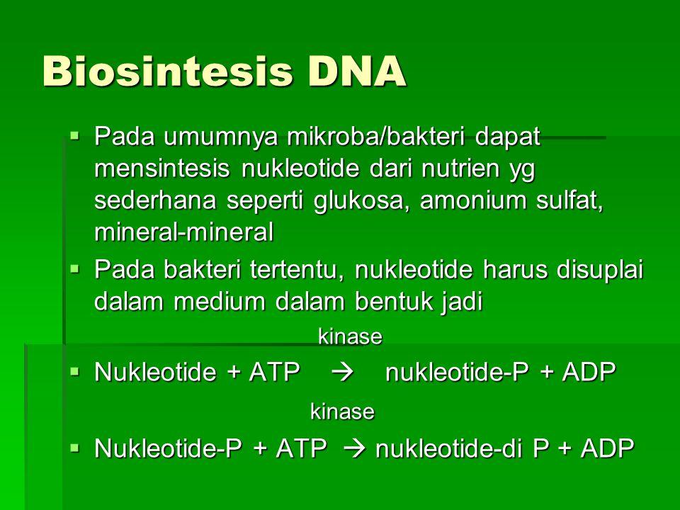 Biosintesis DNA Pada umumnya mikroba/bakteri dapat mensintesis nukleotide dari nutrien yg sederhana seperti glukosa, amonium sulfat, mineral-mineral.