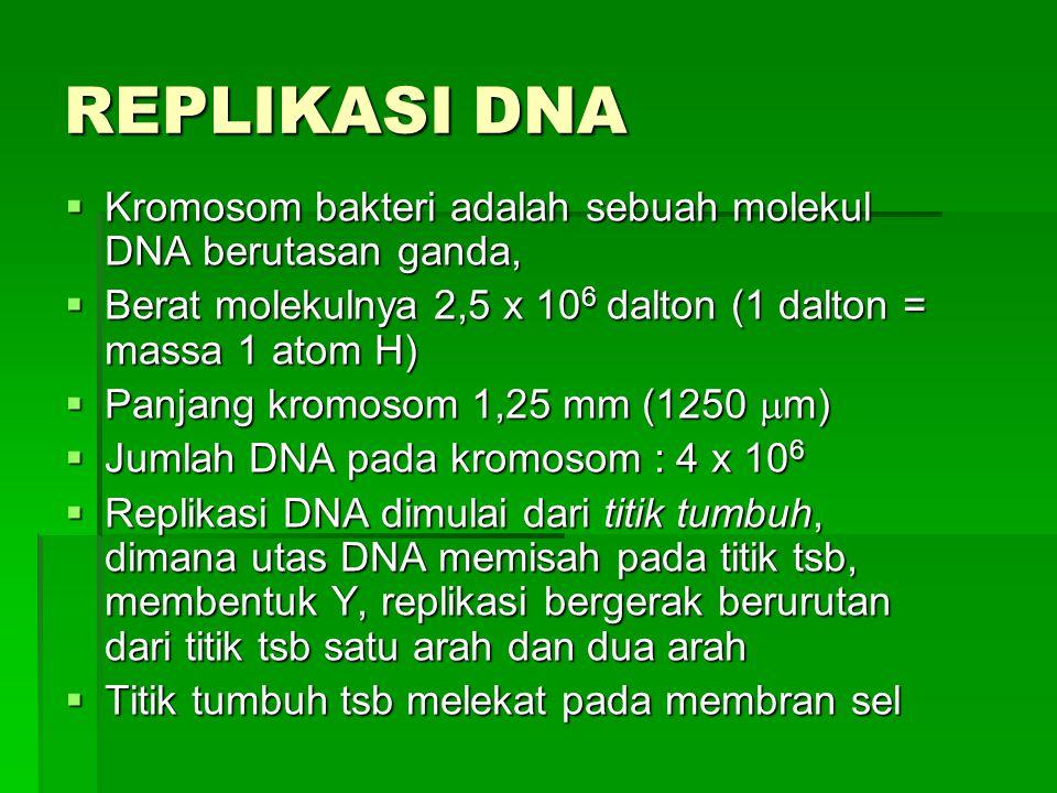 REPLIKASI DNA Kromosom bakteri adalah sebuah molekul DNA berutasan ganda, Berat molekulnya 2,5 x 106 dalton (1 dalton = massa 1 atom H)