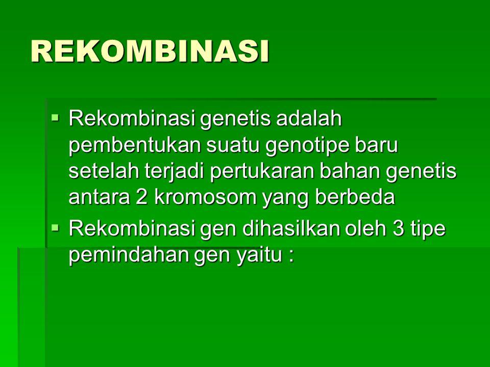 REKOMBINASI Rekombinasi genetis adalah pembentukan suatu genotipe baru setelah terjadi pertukaran bahan genetis antara 2 kromosom yang berbeda.