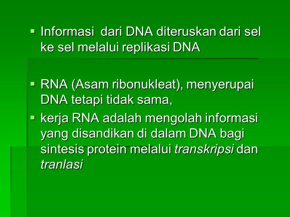 Informasi dari DNA diteruskan dari sel ke sel melalui replikasi DNA