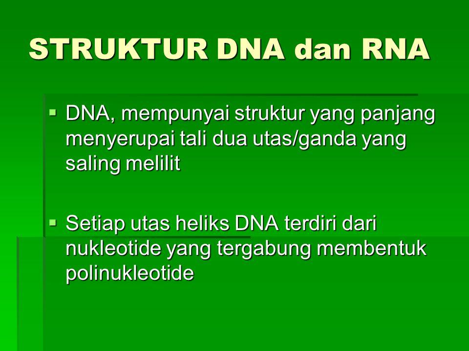 STRUKTUR DNA dan RNA DNA, mempunyai struktur yang panjang menyerupai tali dua utas/ganda yang saling melilit.