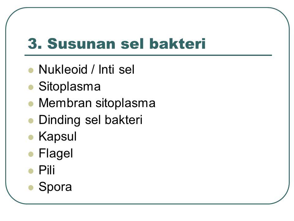 3. Susunan sel bakteri Nukleoid / Inti sel Sitoplasma