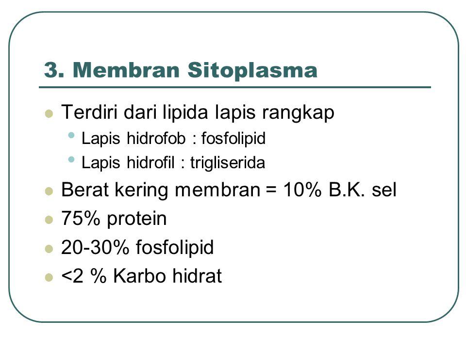 3. Membran Sitoplasma Terdiri dari lipida lapis rangkap