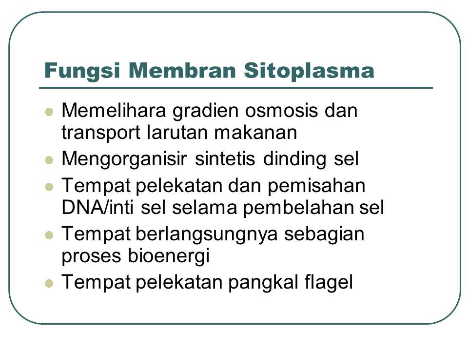 Fungsi Membran Sitoplasma