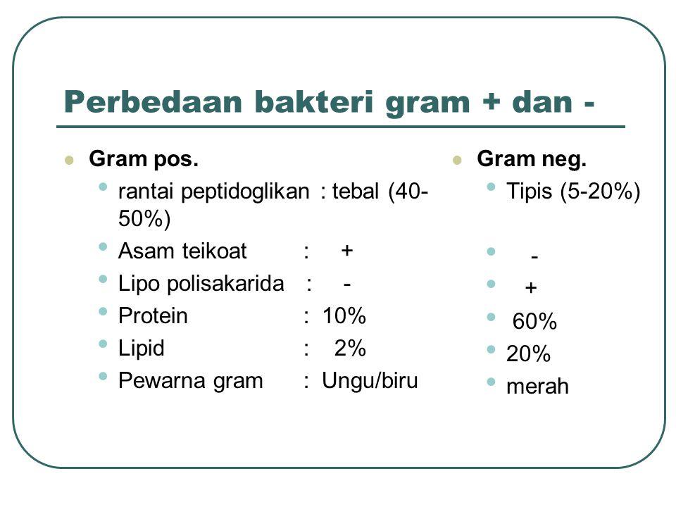 Perbedaan bakteri gram + dan -