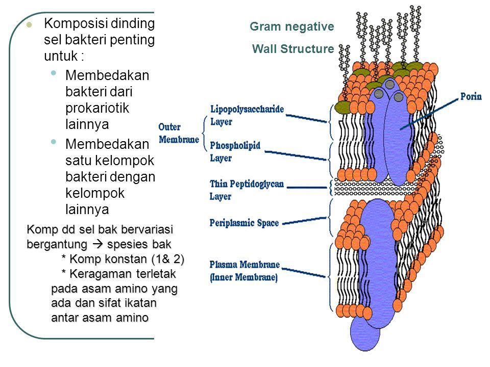 Komposisi dinding sel bakteri penting untuk :