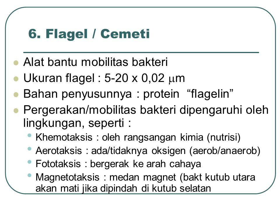6. Flagel / Cemeti Alat bantu mobilitas bakteri