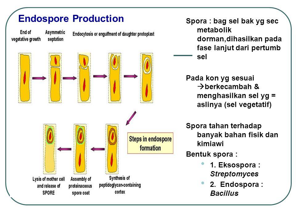 Endospore Production Spora : bag sel bak yg sec metabolik dorman,dihasilkan pada fase lanjut dari pertumb sel.