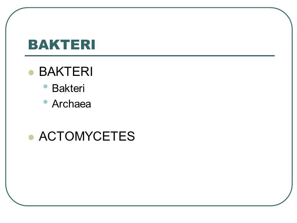 BAKTERI BAKTERI Bakteri Archaea ACTOMYCETES