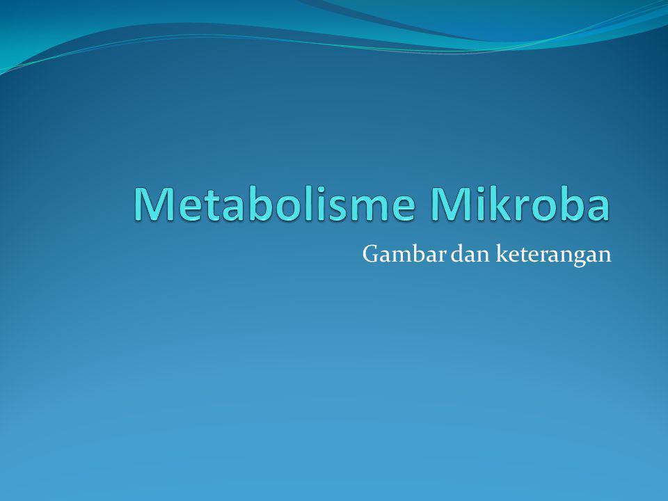 Metabolisme Mikroba Gambar dan keterangan