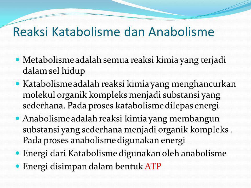 Reaksi Katabolisme dan Anabolisme
