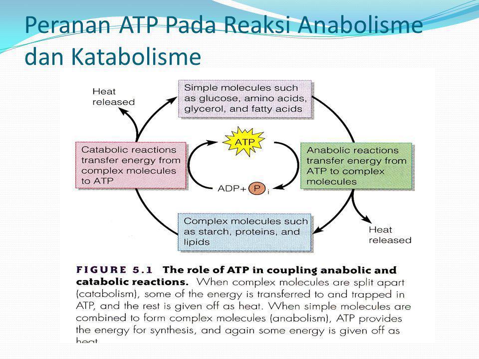 Peranan ATP Pada Reaksi Anabolisme dan Katabolisme