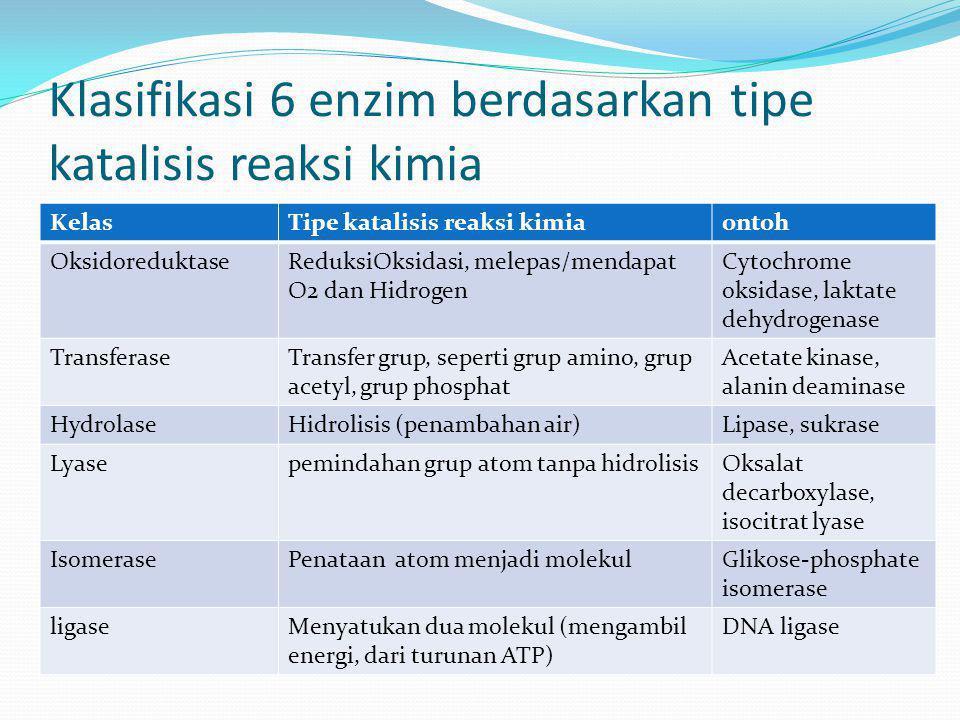 Klasifikasi 6 enzim berdasarkan tipe katalisis reaksi kimia